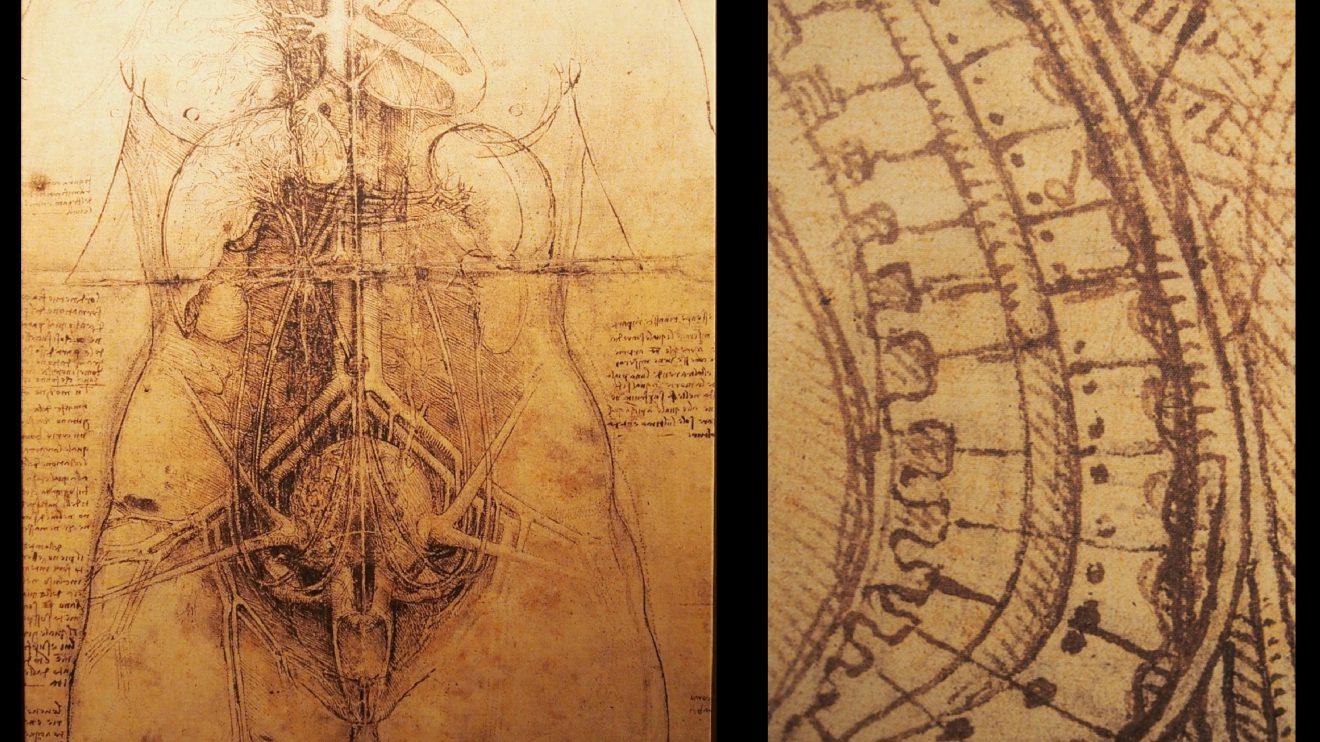 """Estudos anatómicos-  Para Leonardo, a máquina mais maravilhosa era o corpo humano. Os seus estudos do corpo eram apoiados na observação direta sobre cadáveres dissecados. Procurava entender a composição e o funcionamento da estrutura do corpo e do organismo através do desenho. O desenho entendido como """"uma coisa mental"""", assumiu grande importância como ferramenta de investigação e de pensamento, até hoje utilizada com o mesmo propósito. Os desenhos são de tal qualidade de traço, beleza e minúcia que se tornaram em material artístico.   Estudou não só a estrutura e o movimento, ou o funcionamento dos órgãos, como também de onde vêm as lágrimas e os espirros, de onde vem a doença, e até os estados emocionais como a ira, o desejo, a loucura ou a fome. Leonardo desenvolveu a anatomia como um ramo de investigação autónomo, de tal ordem que os seus desenhos permaneceram sem rival até ao fim do século XVIII e marcam o início da ilustração anatómica moderna."""