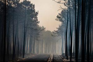 Fotografia por LUSA/TIAGO PETINGA