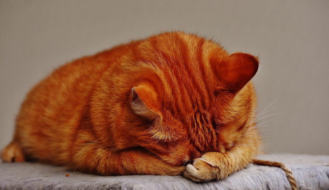 """Foto: """"O Meu Animal"""" blogue"""