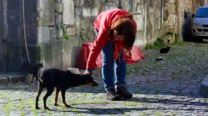 Imagem: Facebook Animais de Rua